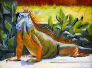 Grand Cayman Iguana-12x9-oil on masonite 2008