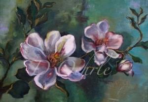 magnoliagrandifolia
