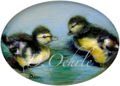 Pekin Ducklings - Oil on Board  8x6 - 2003
