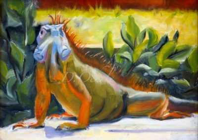 Grand Cayman Iguana-12x9-oil on masonite 2008