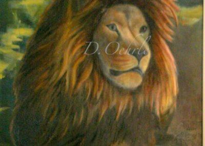 Franklin Park Zoo Lion oil on canvas 20x24 2009